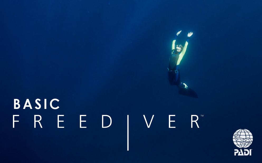 PADI Basic Freediver Kurs